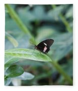 Key West Butterfly Conservatory - In Black White And Orange Fleece Blanket