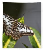 Key West Butterfly Conservatory - In Brown And White Fleece Blanket