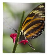 Key West Butterfly Conservatory - Papilio Zagreus Fleece Blanket
