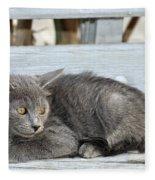 Kitten In Hydra Island Fleece Blanket