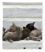 Kittens In Hydra Island Fleece Blanket