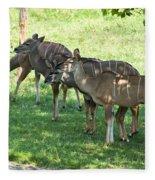 Kudu Antelope In A Straight Line Fleece Blanket