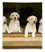 Labrador Puppies At Window Fleece Blanket