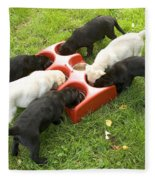 Labrador Puppies Eating Fleece Blanket