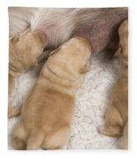 Labrador Puppies Suckling Fleece Blanket