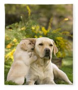 Labrador Puppy Playing With Parent Fleece Blanket