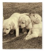 Labrador Retriever Puppies And Feather Vintage Fleece Blanket