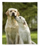 Labradors, Adult And Young Fleece Blanket
