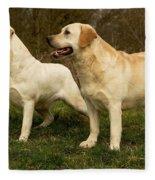Labradors Fleece Blanket