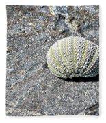 Lacy Shell On A Beachrock Fleece Blanket