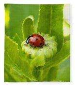 Lady Bug In The Garden Fleece Blanket