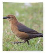 Lady Grackle On A Walk Fleece Blanket