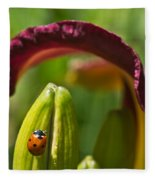 Ladybird Beetle Cuddled By Lily Blossom 4 Fleece Blanket