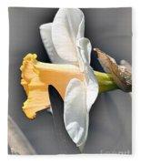Large-cupped Daffodil Named Mrs. R.o. Backhouse Fleece Blanket