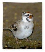 Lark Sparrow Fleece Blanket