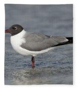 Laughing Gull Fleece Blanket