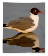 Laughing Gull Larus Atricilla Fleece Blanket