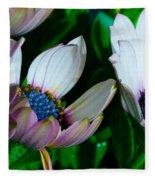 Lavender Frost African Daisy Fleece Blanket