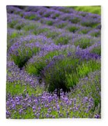 Lavender Rows Fleece Blanket
