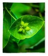 Leaf With Seeds Fleece Blanket