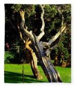 Leaning Cedars Of West Chop Fleece Blanket