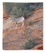 Learning How To Rock Climb Zion Fleece Blanket