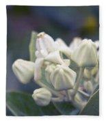 Lei Pua Kalaunu - Crown Flower - Calotropis Gigantea - Asclepiad Fleece Blanket