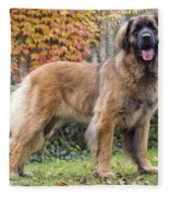 Leonberger Dog Fleece Blanket