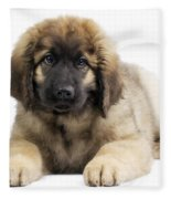 Leonberger Puppy Fleece Blanket