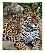 Leopard At Rest Fleece Blanket