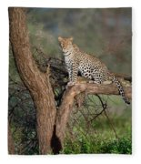 Leopard Panthera Pardus Sitting Fleece Blanket