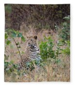 Leopard Sits Fleece Blanket