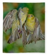 Lesser Goldfinch Females Fighting Fleece Blanket