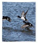 Lesser Scaup Ducks Fleece Blanket