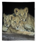 Three Lion Cubs Fleece Blanket