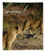 Lion Cubs Of Zimbabwe  Fleece Blanket