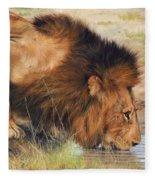 Lion Fleece Blanket by David Stribbling