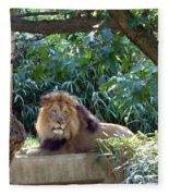 Lion King At Washington Zoo Fleece Blanket