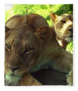 Lioness-00104 Fleece Blanket