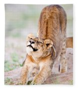 Lioness Panthera Leo Stretching Fleece Blanket