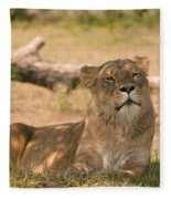 Lioness Fleece Blanket