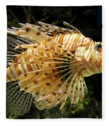 Lionfish Searching For Its Prey Fleece Blanket