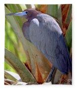 Little Blue Heron Male In Breeding Fleece Blanket