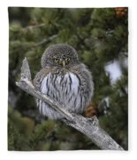 Little One - Northern Pygmy Owl Fleece Blanket
