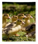 Yellow Muscovy Duck Ducklings Running Fast  Fleece Blanket