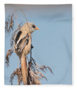 ln06 Bearded Reedling Juvenile Fleece Blanket