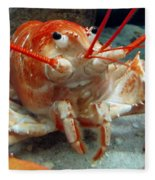 Lobster Fleece Blanket
