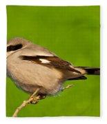 Loggerhead Shrike Fleece Blanket