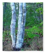 Lone Birch In The Maine Woods Fleece Blanket