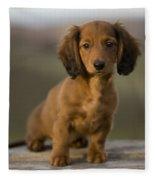 Long-haired Dachshund Puppy Fleece Blanket